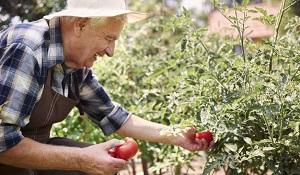 Os benefícios da jardinagem - Copia