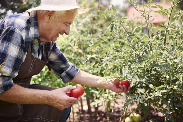 Os benefícios da jardinagem